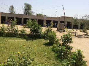 Basti Ghulam Nabi with new sheds and plantation brings a pleasant change