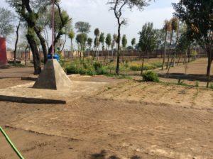 New trees in Lakhmir Dhudi